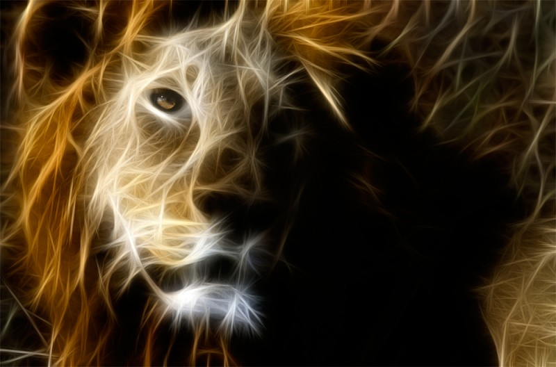 A wild male lion in Botswana, processed with a fractal filter.